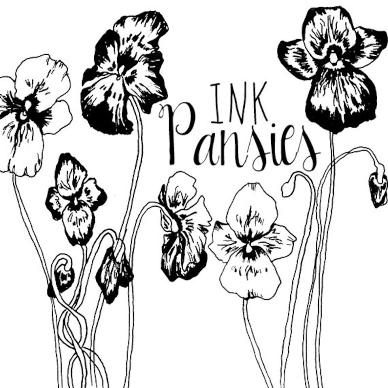 Ink Drawing Pansy Flower Clipart Flowers Clip Art Digital