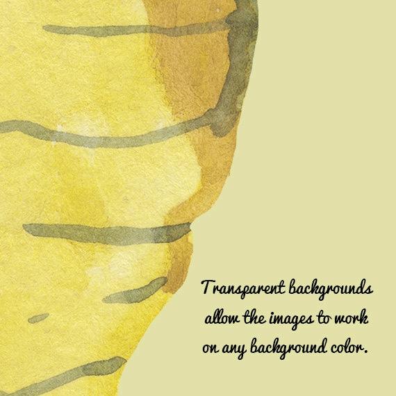 Watercolor Honey Bee Clip Art Image Pack Bees Clipart Digital Download Honeybee Clipart Scrapbooking Honeybees Bee