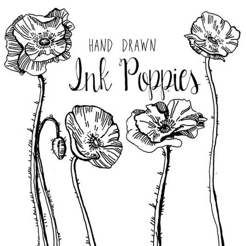 Ink Drawing Poppy Flower Clipart Flowers Clip Art Digital