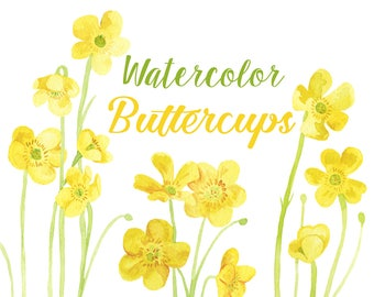 Yellow Watercolor Buttercups Floral Clip Art Illustrations