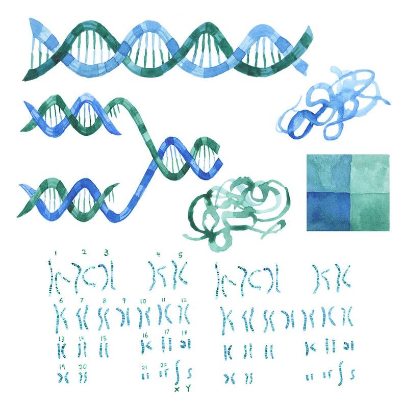 RNA Illustrations Science watercolor art Watercolor DNA clip art Chromosones art DNA Genetics artwork Watercolor Science Artwork