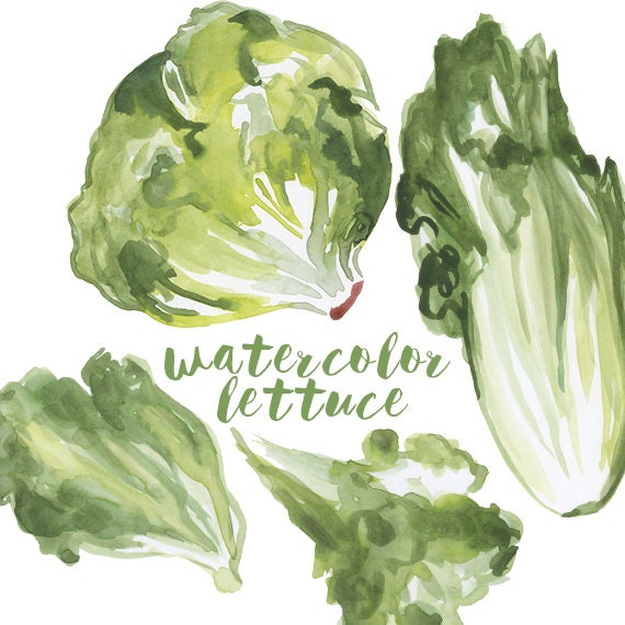 Lettuce clipart black and white free images - ClipartBarn