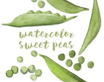Watercolor Sweet Peas, Sweet Pea Clip Art, Pea Clipart, Veggie Clipart, Culinary Clip Art, Food Clipart, Sweet Peas Clip Art, Food Art