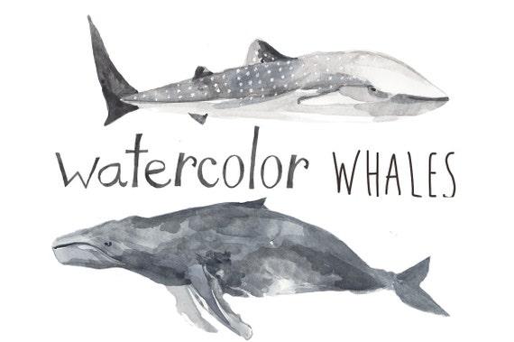 Whatercolor Wal Clipart Undersea nautische Wal ClipArt Blauwal Beluga Wal Killerwal Pottwal Humpback Whale Whale Print Kunst