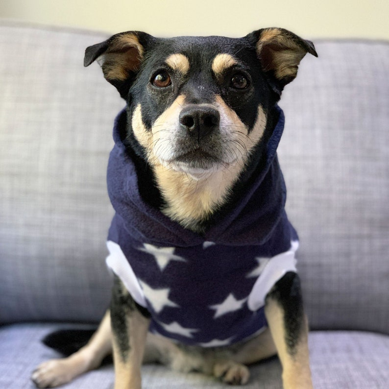 Milky Way Dog Hoodie The Sophisticated Pet | Stay at Home Mum