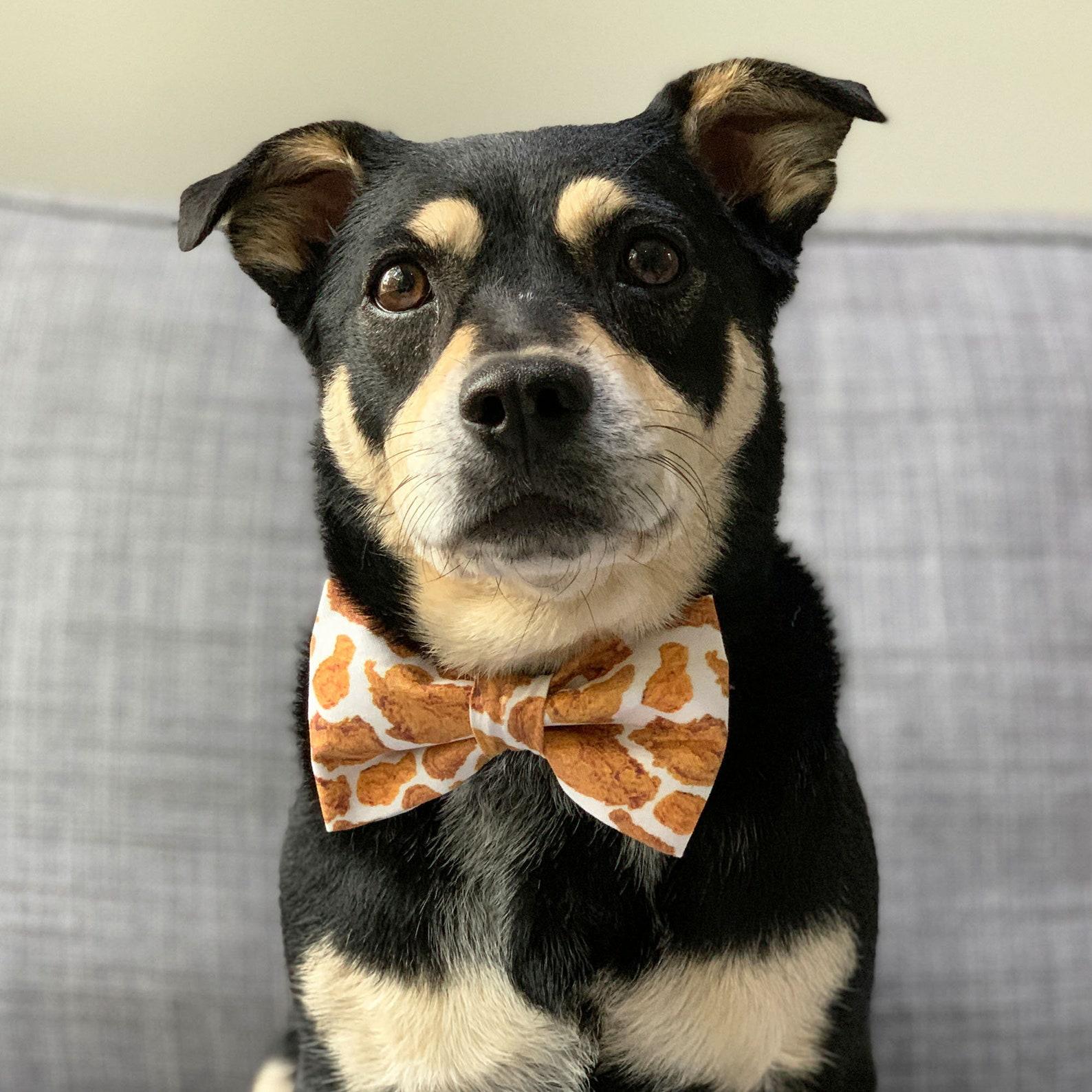 Dog wearing a bow tie with fried chicken print