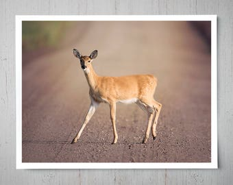 Female Deer - Animal Photography, Archival Giclee Print, White Tail Wildlife Photo - Multiple Sizes Available