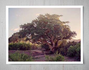 South Africa Safari Tree, Landscape Photography, Archival Giclee Print, Nature Photo - Multiple Sizes Available