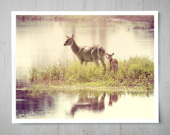 Waterbuck Mother and Baby - Animal Photography, Africa Safari Archival Giclee Print, Wildlife Photo - Multiple Sizes Available