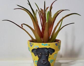 Labrador planter with artificial succulent