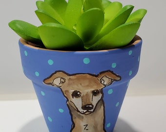 Greyhound dog with artificial succulent