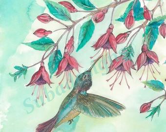 Fine Art Print Pen and Watercolour 'Hummingbird and Fuschia'