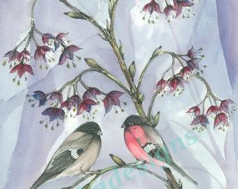 Fine Art Print Pen and Watercolour 'Bullfinch Couple'