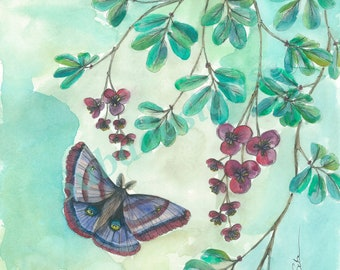 Fine Art Print Pen and Watercolour ' Aratharaea Moth and Chocolate Vine'