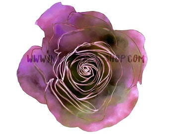 DIGITAL Purple Pink Green Watercolour Rose Flower Clipart Floral Multicoloured Two-Toned Downloadable Printable PNG 300dpi InsideMyNest