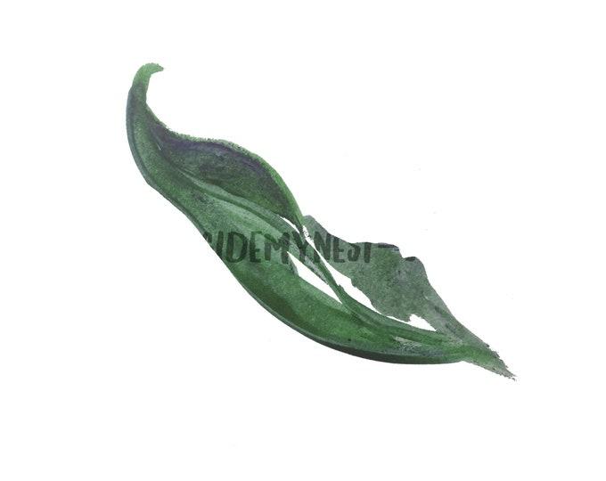 DIGITAL Hunter Green Watercolour Leaf Clipart Logo Digital Download PNG 300dpi DIY Craft Scrapbooking Invitation Card Making