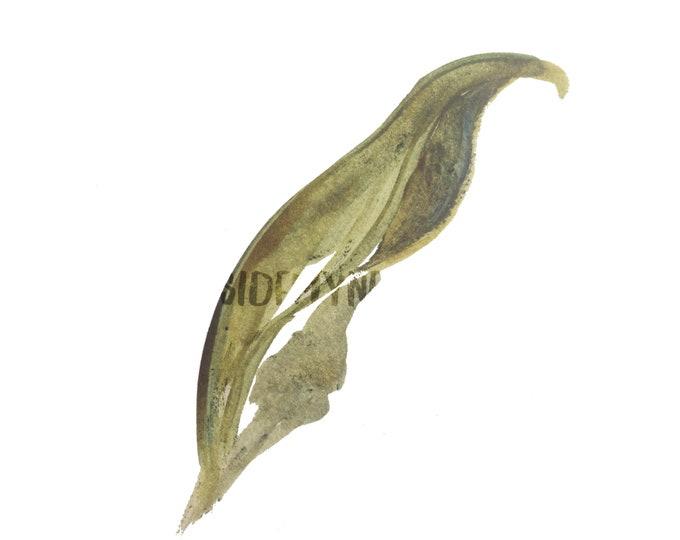 DIGITAL Sage Green Watercolour Leaf Clipart Logo Downloadable PNG 300dpi DIY Craft Scrapbooking Invitation Card Making
