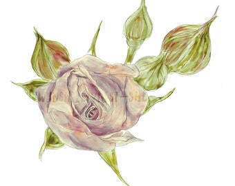 DIGITAL Vintage Rose Handpainted Watercolour Clip Art Logo Flower Floral Mauve Peach Scrapbook Journal Stickers PNG 300dpi
