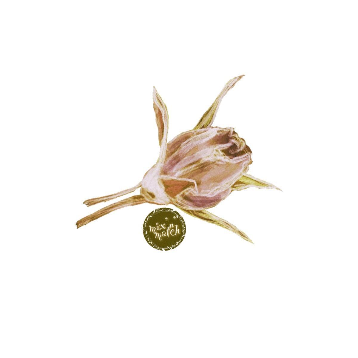 Dusty Rose Blush Watercolour Floral Clipart Bud Vintage Flower