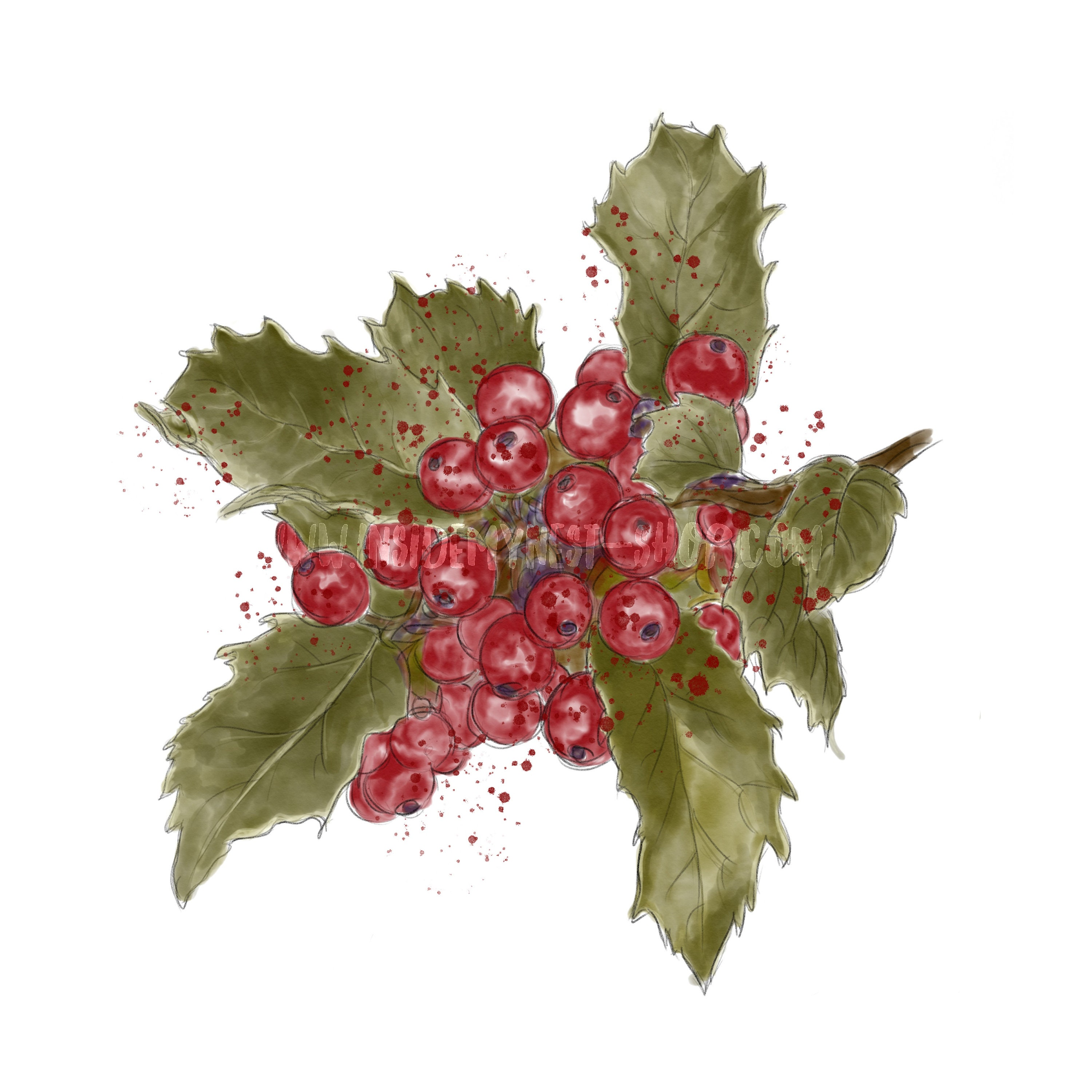 Christmas Holly Png.Digital Watercolour Christmas Holly Leaves Red Berries