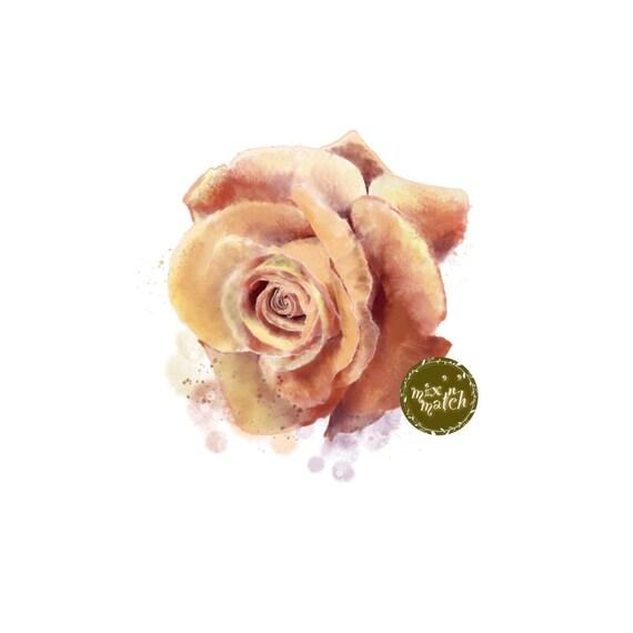 DIGITAL Watercolour Flower Rose Clipart Harvest Gold Amber Burnt Orange Downloadable Printable PNG 300dpi DIY Wedding InsideMyNest