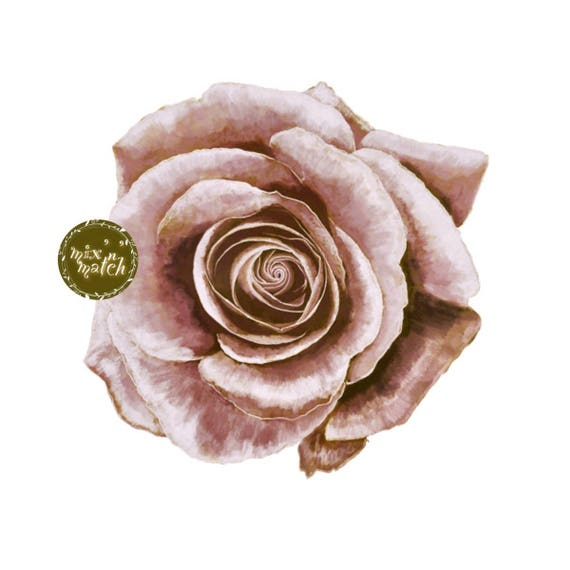 Dusty Rose Blush Watercolour Floral Clipart Vintage Flower Downloadable Printable Digital PNG 300dpi DIY Wedding Invitation Baby Shower