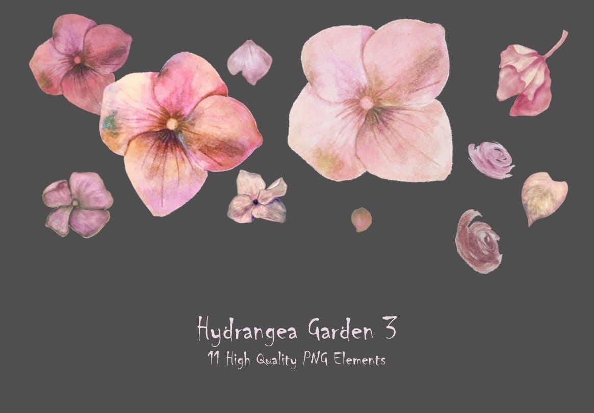 DIGITAL Hydrangea Pink Petals Clipart Watercolour Flowers
