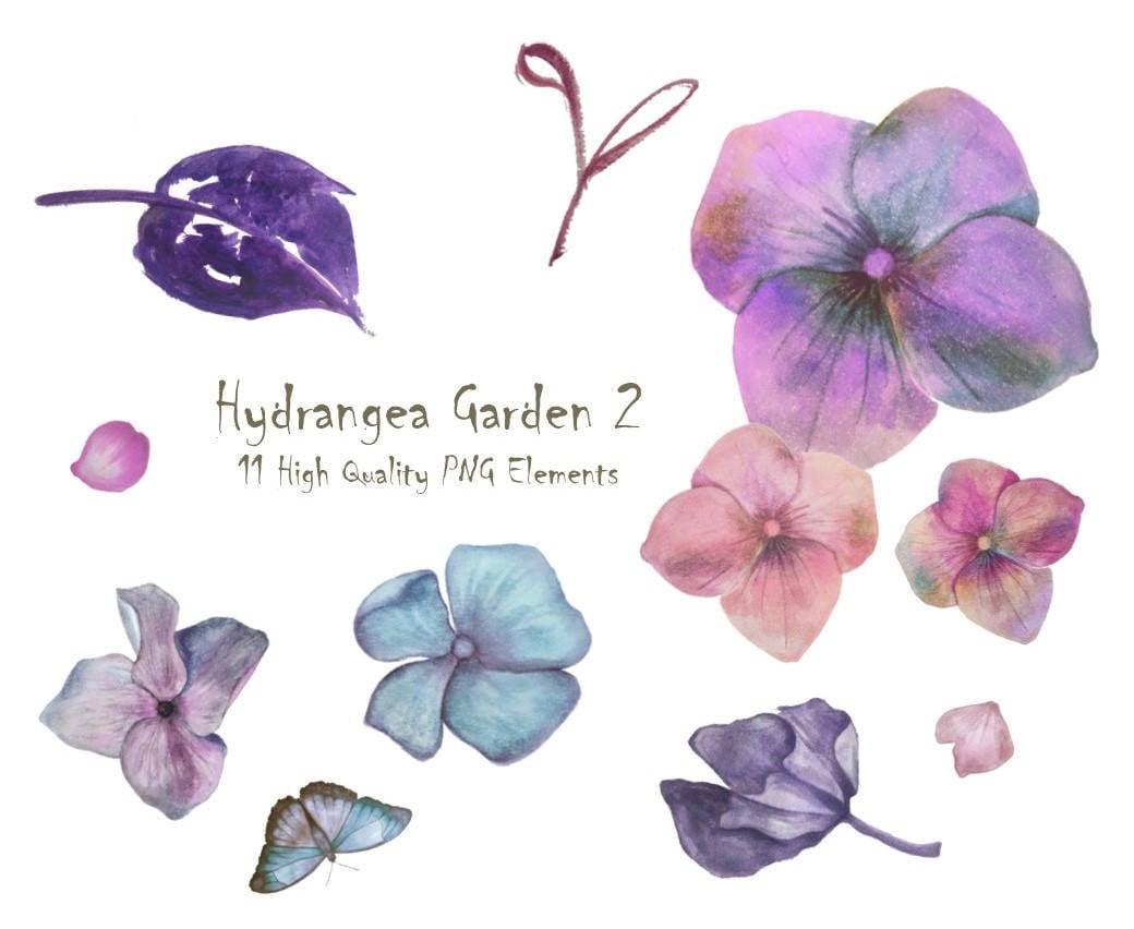 DIGITAL Art Hydrangea Watercolour Flowers PNG