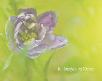 Abstract Flower Photography, Fine Art Photography - Dreamy Delphinium