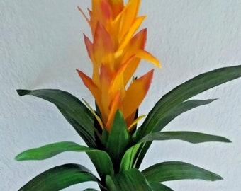 "21"" Guzmania plant"