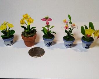 5 Thimble Miniature clay plants