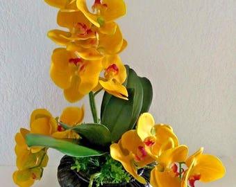 "22"" phalaenopsis orchid arrangement"