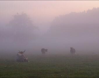 Morning on a Farm - Hale Farm - Ohio - Color Photo Print - Fine Art Photography (HF01)