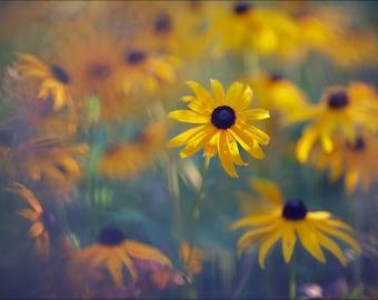 Black Eyed Susan - Color Photo Print - Fine Art Photography (RB02)