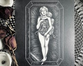Anatomical Venus - Origin...