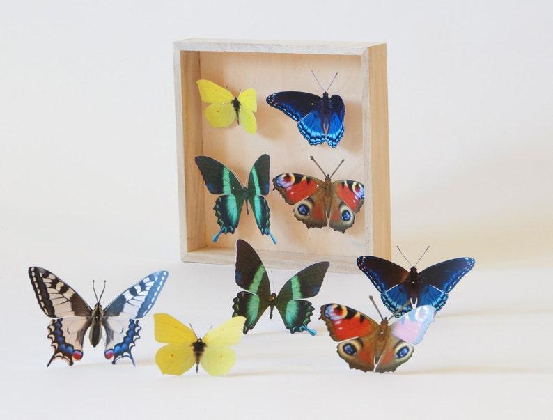 Deko Schmetterlinge Für Die Wand wand-deko schmetterlinge vielfalt 9   etsy