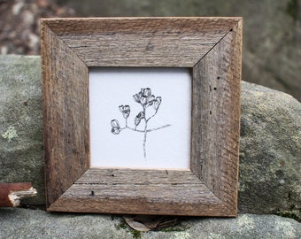 Gumnuts FRAMED print by Cliffwatcher, printed on recycled handmade paper, botanical art, Australian natives, recycled timber frame