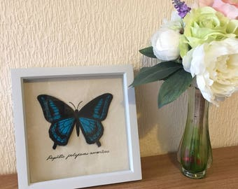 Embroidered Organza Swallowtail Butterfly Shadowbox