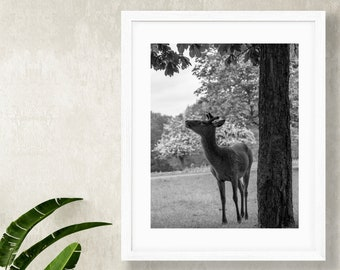 Fawn in Richmond Park Print - Baby Deer Photography - Black and White Wildlife Wall Art