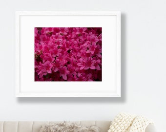 Pink Azaleas Print - Richmond Park, Isabella Plantation Photography - Flower Wall Art