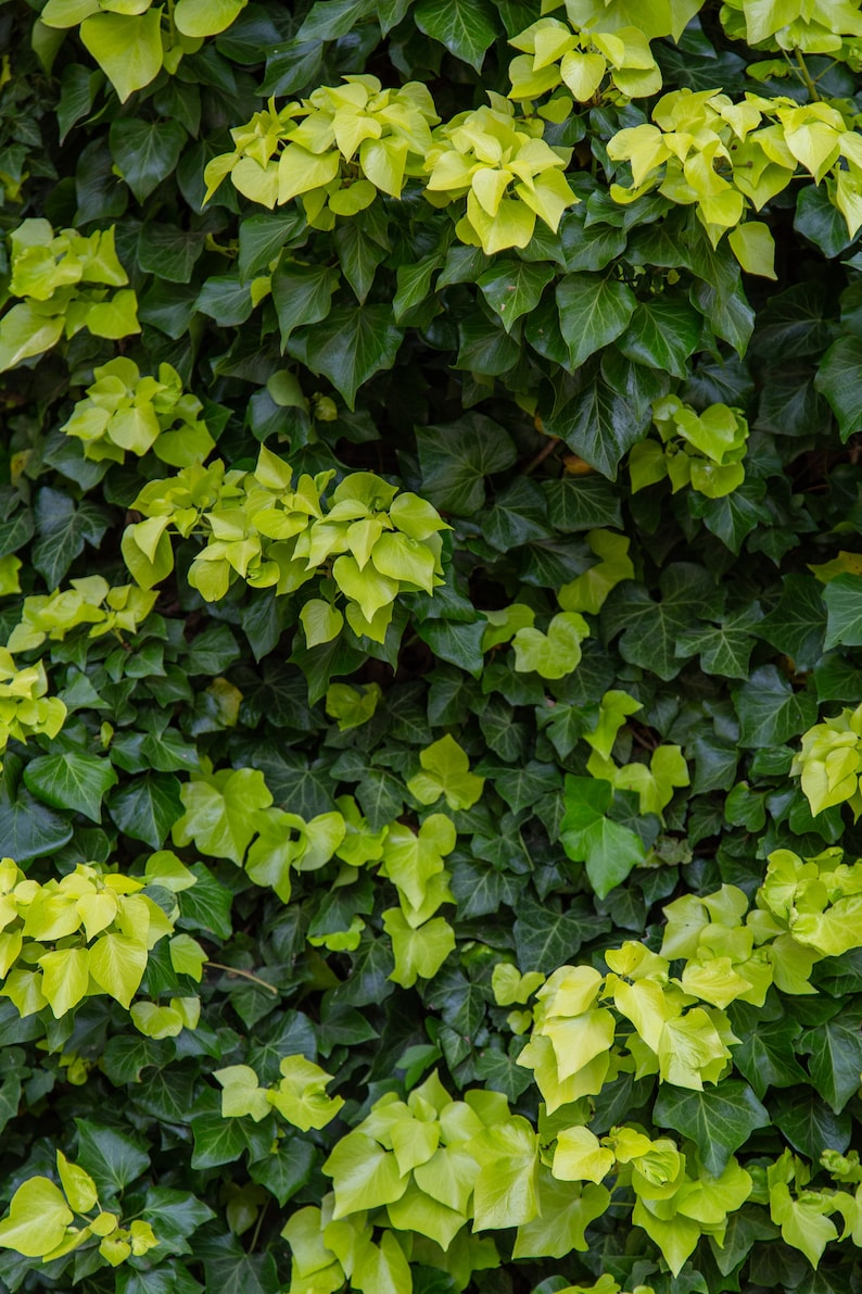 Green Leaves  Nature Print  Nature Photography  Texture image 0
