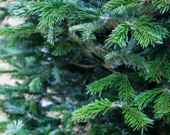 Christmas Tree Print - London Photography - Evergreen