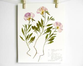 Evening Primrose Print; plant art pressed flower print floral nursery art botanical print pressed botanical art purple wildflower art label