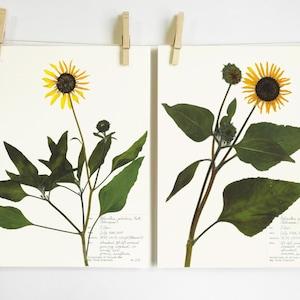 local Indian paintbrush and wild sunflower from Montana handmade card original