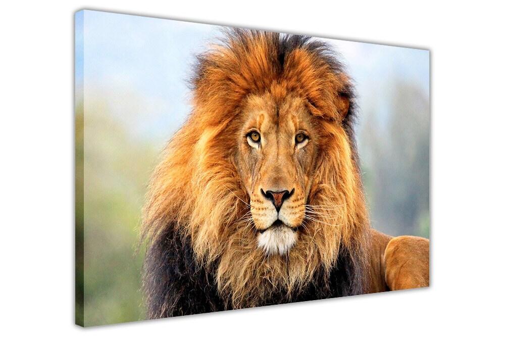 Afrikanische Löwen in der Wild gerahmte Bilder Leinwand Wand | Etsy