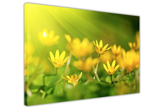 Yellow Oxalis Flower Floral Poster Prints Wall Art Pictures Home Decoration