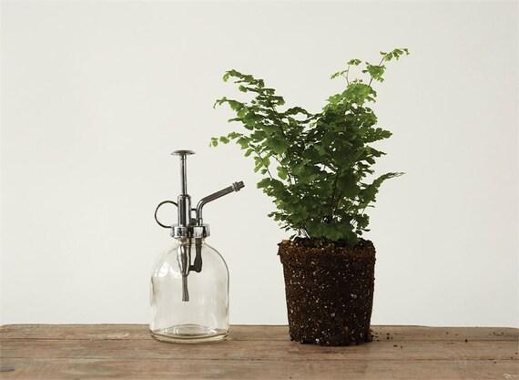 Glass Plant Mister