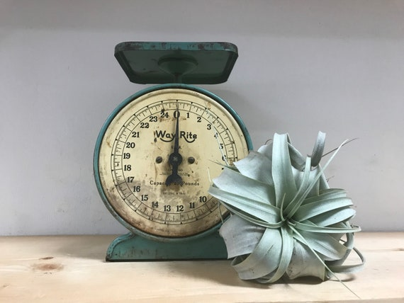 Perfectly Patina'd Vintage Turquoise Scale
