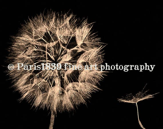 Dandelion Wall Art, Dandelion Seeds, Dandelion Instant Download, Dandelion Print, Digital Download, Dandelion Pictures, Fine Art Photography