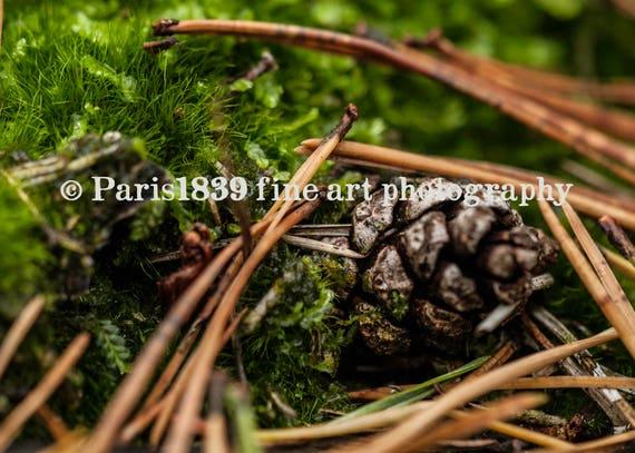 Autumn Pictures, Instant Download, Fall Nature Pictures, Autumn Photo, Autumn Theme, Pinecone Macro Photo, Digital Download, Autumn images